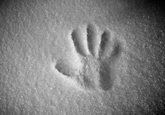 palm print in snow