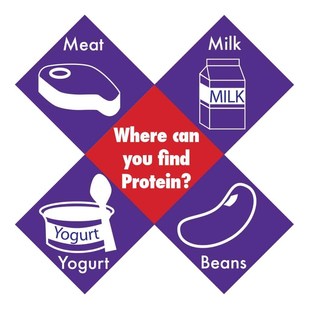 Find Protein