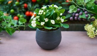 Why House Plants Enrich Our Daily Lives
