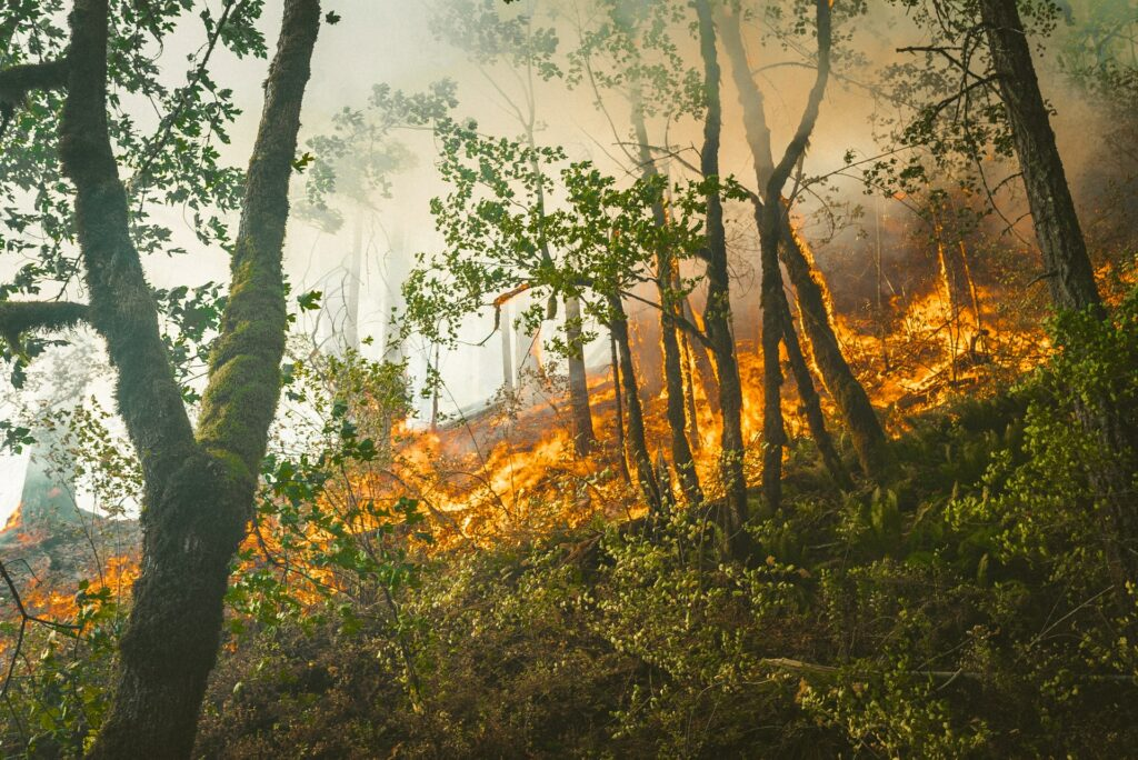 Protect the Environment from Wild Fires and Habitat Destruction