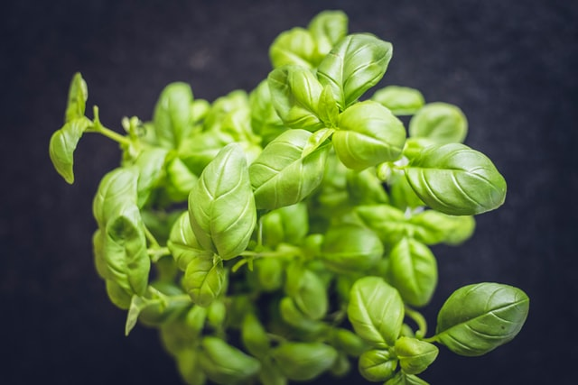 Mint is a natural herb that is good for your health and delicious